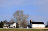 Home and Barn with huge Sycamore tree near Bird in Hand PA