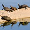 malibu_turtles 116.43544