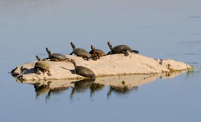 malibu_turtles 092.4354