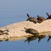 malibu_turtles 116.345