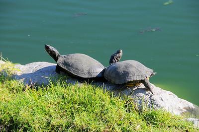 malibu_turtles 020.3454
