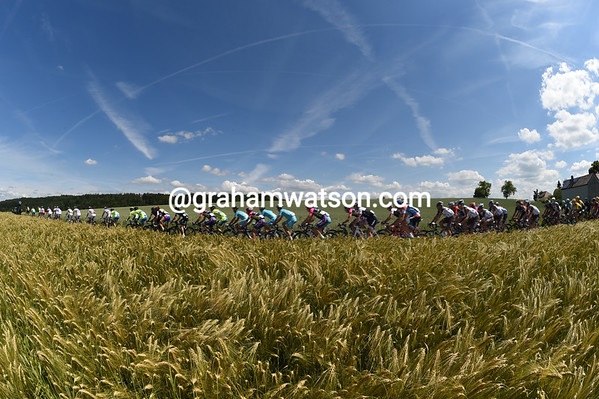 The peloton speeds between wheatfields on a very summery day in Switzerland...