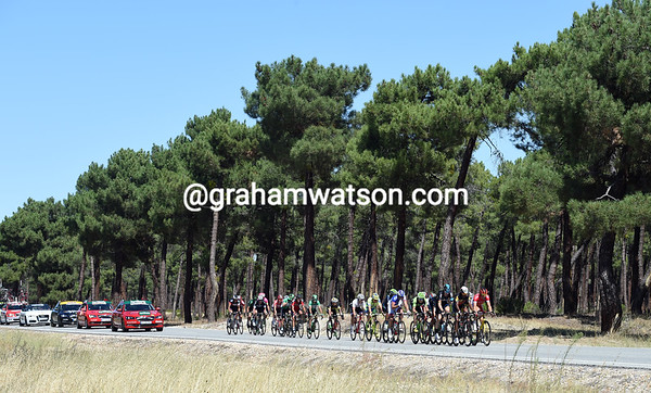 An escape of 24 riders is racing along a forested highway in the province of Avila...