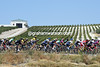 The peloton passes a vineyard producing grapes for Sherry, near the Andalucian town of Jerez-de-la Frontera