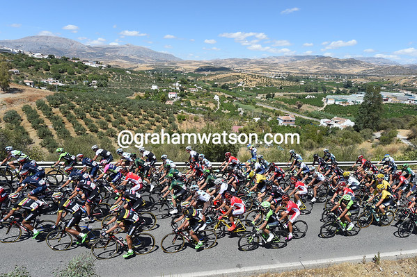 The peloton climbs above the olive groves of Andalucia..
