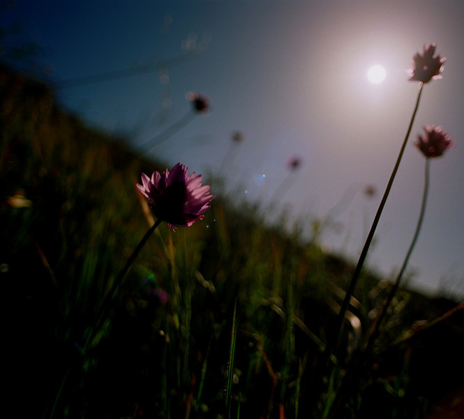 Pincushions and the Sun<br /> Film originated photo.<br /> 18x20, 20x24, 27x30 on paper; and up to 36x40 on aluminum.