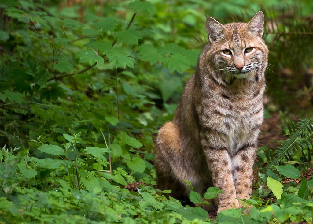 IMAGE: http://jasonwalker.smugmug.com/Other/Other/i-8L8nNf4/0/X2/DSC_1852-2-X2.jpg