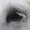 Eye1edited