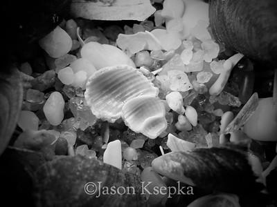 Baskett Shell, Belmar Beach, N.J. 12/18/06 - 5