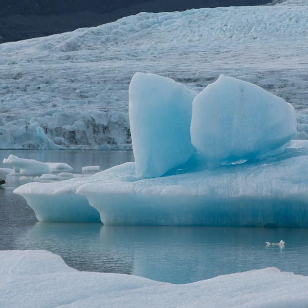 Coupled. Fjallsárlón Glacier lagoon, South Iceland.