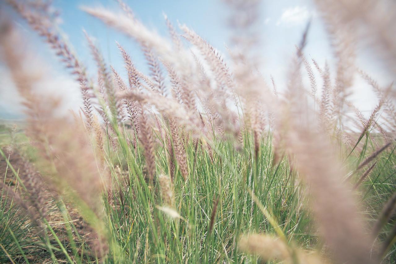 Saddle Road Grass