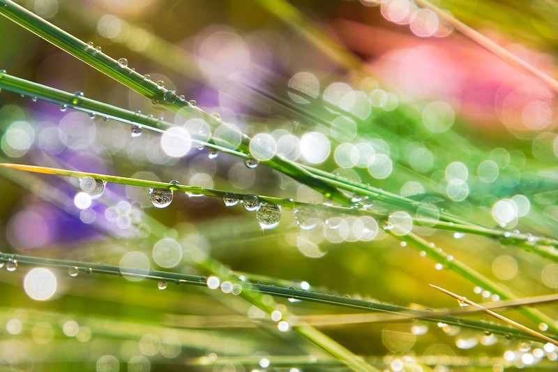 Dew drop rainbow