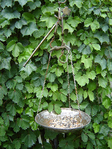 Our Yard  This old scale works now as a Bird Feeder