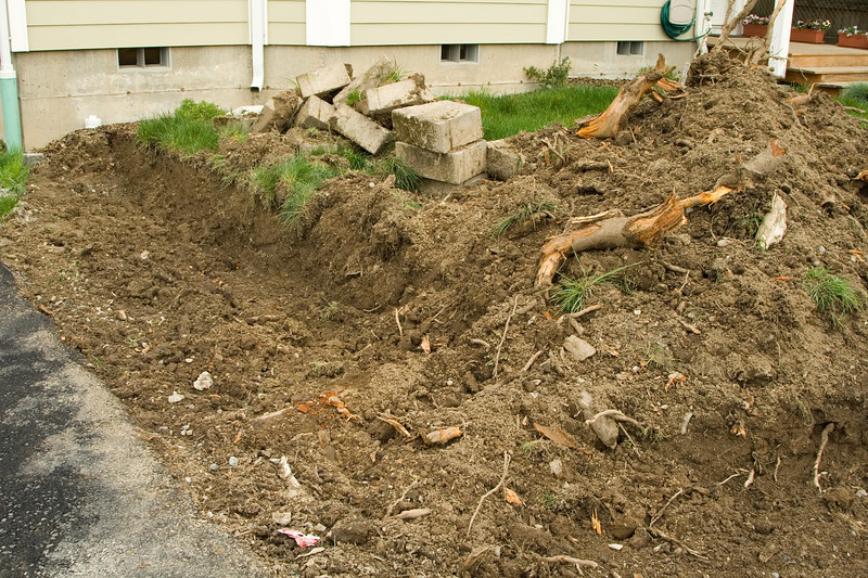 A first look at the roots we couldn't get with the excavator for fear of damaging the driveway