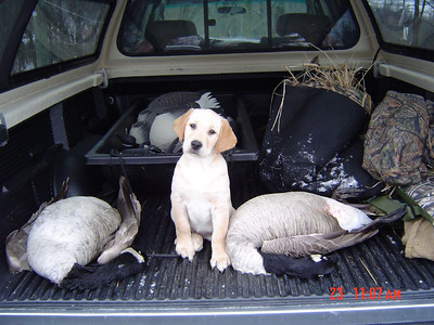 ""\""""Bogie"""" New Baker Addition  See Dad, I'm catching on to this Hunting Thing ! But next time, shoot something smaller, so I can carry it.""400|300|?|en|2|baa0ed6e5f76b1c807caccc4b20f7c49|False|UNLIKELY|0.2884491980075836