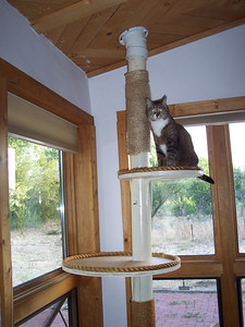 Vespa approves of the new sunny window corner for the cat tree.