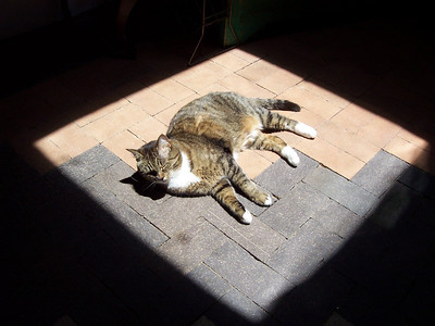 Vespa naps on the sunroom floor in a midday ray of sunshine coming through the skylight.