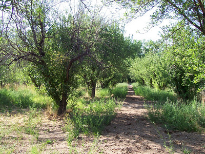 Just a small part of our 100-tree apple orchard.