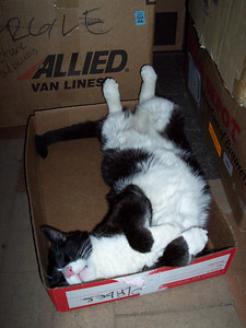 Moving can be hard work. Hank takes a break even though he hasn't helped move a single box or piece of furniture.