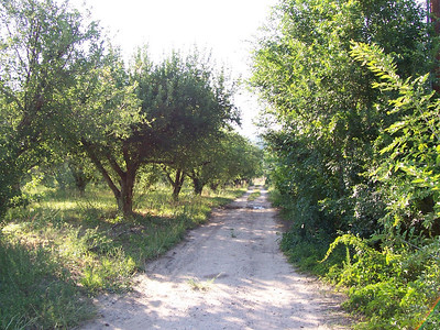 Looking up from the lower half of our driveway right where it reaches the circle drive. There are ten rows of apple trees (and some pear and apricot mixed in) from here to our gate. The orchard is also about ten trees wide, so we estimate 100 trees, give or take a dozen.