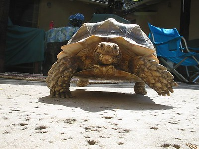 Our turtle Gammera / AKA Quasi~Moto