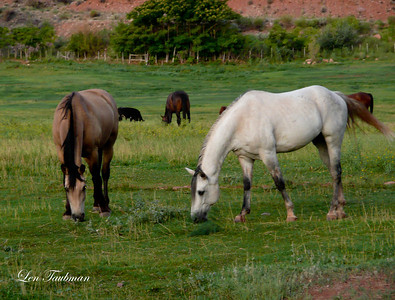Red Cliff Lodge Horses