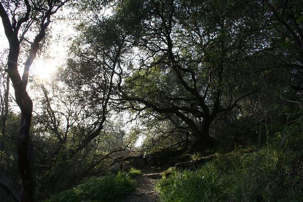 Outdoor-Nature Shots