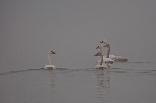 Outer Banks and Lake Mattamuskeet 2012