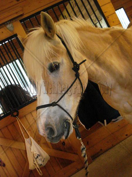 Proud Horse
