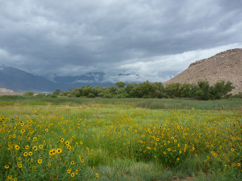 looking west toward the sierra