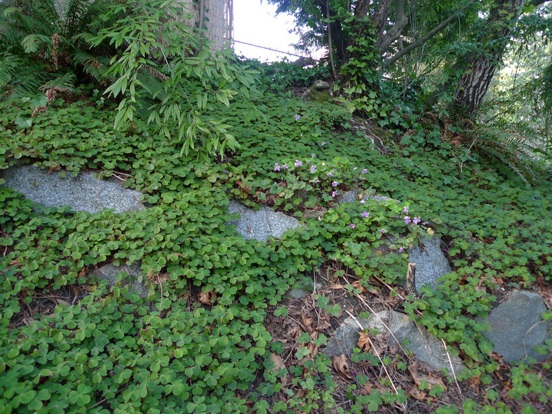This is, I believe, one of the sources of the infestation, a rockery area on the edge of a back yard.