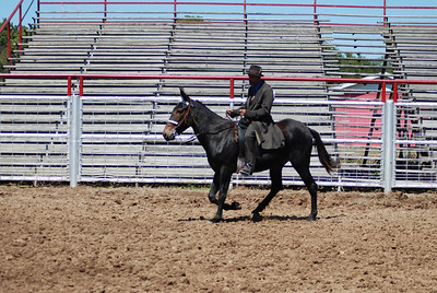 English Attire Gaited Open