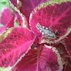 "Sheila Wolfson has a blog, ""Sheila's Shady Salem Garden,"" where she post photos that include a busy bee from last summer.<br />  <br /> Sheila Wolfson<br /> 12 Hartford St.<br /> Salem, MA 01970"