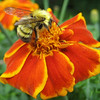 "Sheila Wolfson has a blog, ""Sheila's Shady Salem Garden,"" where she post photos from all the seasons, including a busy bee from last summer."