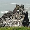 birds on a big rock