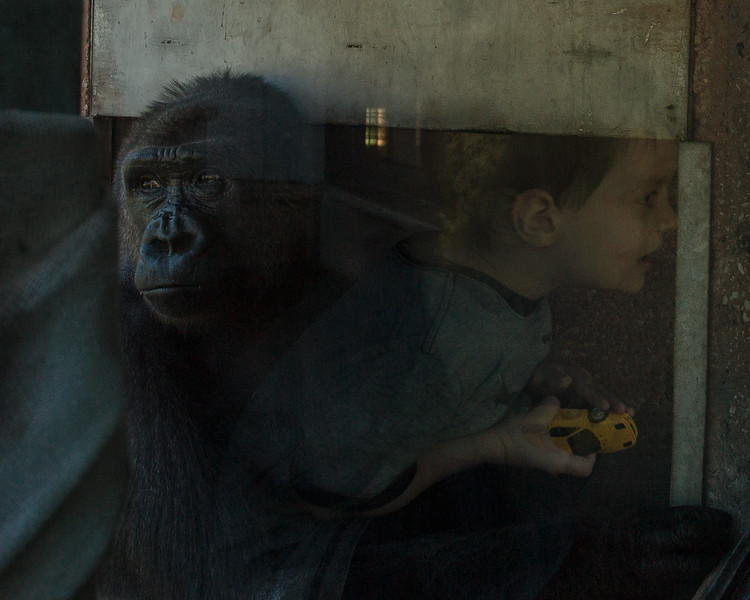 Boy and Gorilla