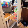 John P. Cleary | The Herald Bulletin<br /> The family dog is limited to the kitchen while Lindsey does her workout in the living room.