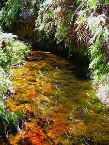 1 15 2015  Kawaikoi Stream , aug 22, 2005