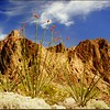 3 3 2015 Palm Canyon, KofA Nat Wild Ref, near Yuma, AZ, apr 1991f3
