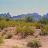 2 24 2014 Skull Rock, Organ Pipe Cactus Nat Mon, AZ, march 1989 jpeg