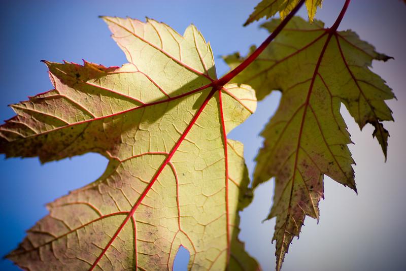 red veins (november 3, 'o7)