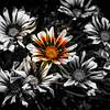 SINGULAR COLORED FLOWER