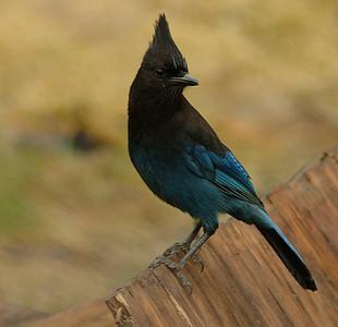 POW Birds 2
