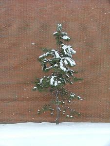 A tree. A lone.