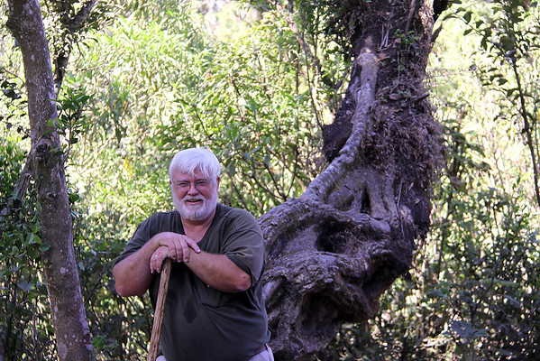 brief rest on a gnarled tree that has been beaten but not conquered on the side of a volcanoe