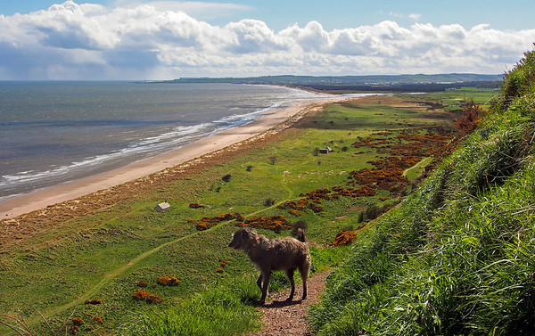 The St Cyrus end of Montrose Bay.<br /> <br /> 13/05/13