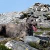 Creag Pitridh, Munro #14<br /> <br /> 22/07/13