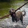 <i>We like BIG sticks.</i><br><br>  08/06/13