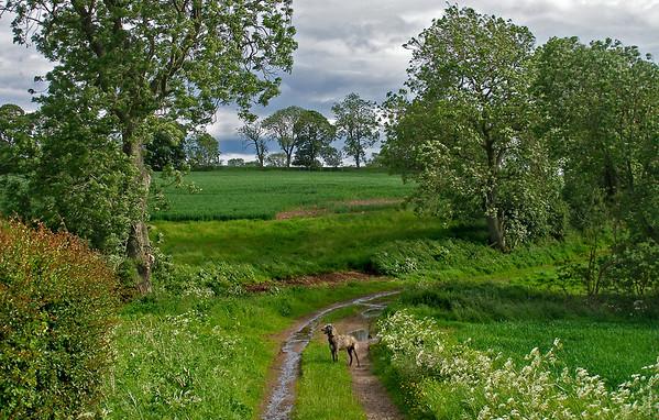 Midsummer in the farmland east of Brechin,<br /> <br /> 23/06/12