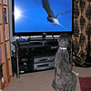 but he soon developed an interest in David Attenborough programmes.<br /> <br /> 10/12/11